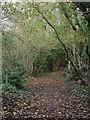 SS8577 : Public footpath, Cwm y Gaer in autumn by eswales