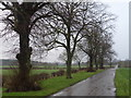 SK6664 : Tree-lined road to North Laithes farmstead by Graham Hogg
