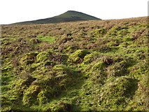 SO2718 : Sugar Loaf by Philip Halling