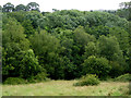 SJ9954 : Woodland south-east of Leek, Staffordshire by Roger  Kidd