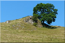 SK1455 : Tree and rocky crag overlooking Mill Dale by Mat Fascione