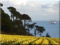 SW7828 : Daffodils at Chenhalls by Rod Allday