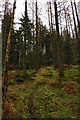 SD3493 : Grizedale Forest, Bogle Crag Trail by Kate Jewell