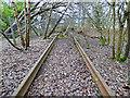 NS3075 : Former James Watt Dock Railway Line by Thomas Nugent