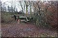 TA0677 : Felled tree in Stocking Dale by Ian S