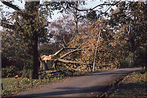TQ2636 : Storm damage in Goffs Park (1) by Peter Shimmon