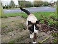SU4886 : Friendly Cat by Bill Nicholls