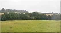TL1217 : Trees along The Upper Lea Valley Walk by N Chadwick