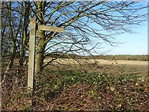 SK7160 : Signpost east of Maplebeck by Neil Theasby