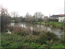 SK5984 : The village pond, Carlton in Lindrick by John Slater
