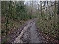 TQ1851 : Bridleway down Juniper Bottom by Hugh Venables