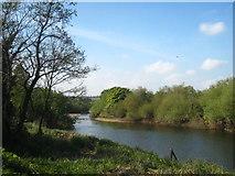 O0575 : Looking up the River Boyne near Oldbridge by Rod Allday