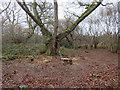 TQ1760 : Halo release, Ashtead Common by Hugh Venables