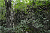 SK1373 : Ruins in a woodland by N Chadwick