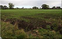 SJ5541 : Waymills field, Whitchurch by Jaggery