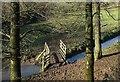 SX2462 : Footbridge near Lodge Farm Crossing by Derek Harper