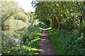 SU4567 : National Cycle Route 4 along the Kennet & Avon Canal by N Chadwick