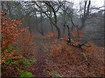 NS4175 : Path near Gruggies Burn by Lairich Rig