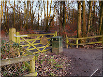 SJ5799 : Entrance to Skitters Wood from Woodedge by David Dixon