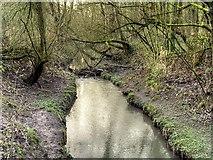 SJ5799 : Skitters Wood, Millingford Brook by David Dixon