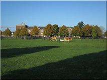 TL4259 : Cows by the vet school by Hugh Venables