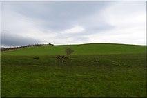 SE2968 : Hum Hill by DS Pugh