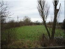 TA0779 : Grazing, Manor Farm by JThomas