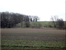 TA0779 : Farmland towards Flotmanby Brow by JThomas