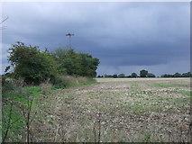 TM0960 : Farmland and hedgerow near Jockey's Farm by JThomas