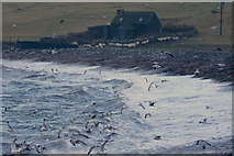 HP5605 : Gulls over the surf at Westing beach by Mike Pennington