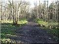 SE5533 : Path heading north-east across Main Drain by Christine Johnstone