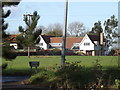 TM0960 : Trees on Wicks Lane at Wick's Green by Geographer