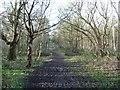 SE5633 : Bridge across Main Drain, Bishop Wood by Christine Johnstone