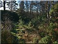 NS4276 : Disused track by Lairich Rig