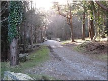J3629 : View SSE along a forest road towards Craignagore Bridge by Eric Jones