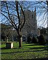 TL3540 : In Royston churchyard in February by John Sutton