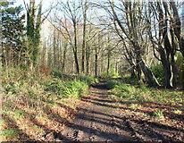 NS2209 : Woodland Track, Culzean by Billy McCrorie