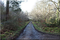 NS2209 : Swinston Drive, Culzean Country Park by Billy McCrorie