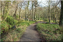 NS2209 : Path to Piper's Brae, Culzean by Billy McCrorie