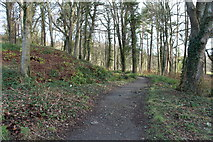 NS2209 : Path from the Swan Pond to Piper's Brae, Culzean by Billy McCrorie