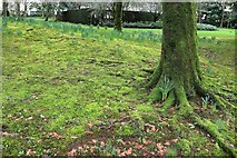 SX7962 : Mossy ground, Dartington Hall Gardens by Derek Harper