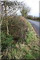 SU4199 : Culvert beside minor road to Netherton by Roger Templeman