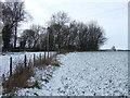 NZ2219 : Field boundary and woodland, Walworth by JThomas