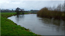 SO5635 : The River Wye at Holme Lacy by Jonathan Billinger
