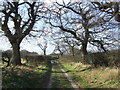 TM4996 : Tree Lined Track by Keith Evans