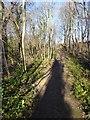 NZ4345 : Path above Hawthorn Dene by Oliver Dixon