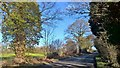 SK8366 : Creeping ivy on trees beside Besthorpe Road by Chris Morgan