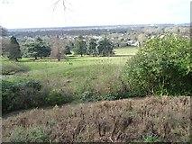 TQ1873 : Petersham Park [Richmond Park] by Christine Johnstone