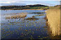 SD4875 : Leighton Moss in winter by Ian Taylor