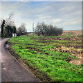 SD3409 : Plex Moss by David Dixon